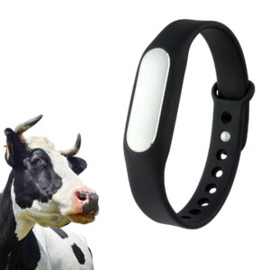 Pedometer For Cows